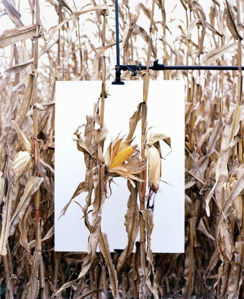 """Mathieu Asselin, from the Series """"Monsanto®: A Photographic Investigation"""", 2012, © Mathieu Asselin"""
